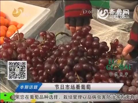 20150302《农科直播间》:节日市场看葡萄