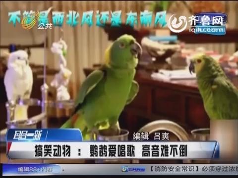 鹦鹉爱唱歌高音难不倒 《纤夫的爱》都是小儿科