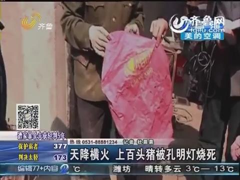 莒南县:天降横火 上百头猪被孔明灯烧死