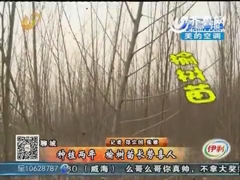 聊城:种植两年 榆树苗长势喜人没人要