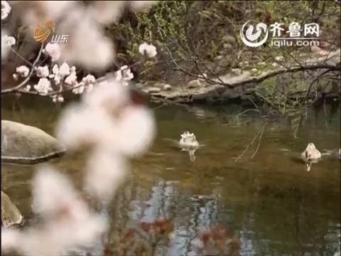七彩春天 花开齐鲁