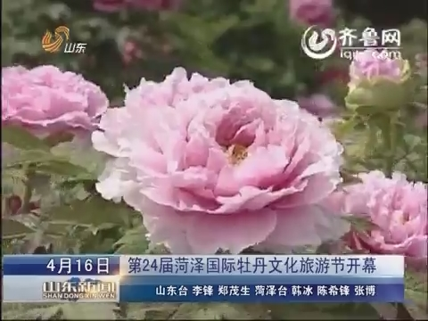 菏泽:一朵牡丹花 繁荣一座城