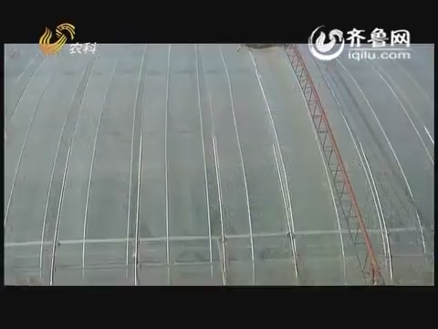 """""""金正大""""农科示范田:寿光大棚谈滴管"""