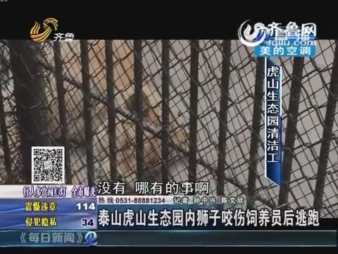 泰山虎山生态园内狮子咬伤饲养员 周边商贩:已被击毙