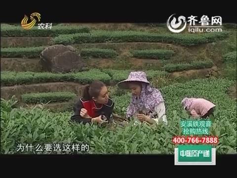 20150529《中国原产递》:安溪铁观音 山泉水灌溉甘甜醇香