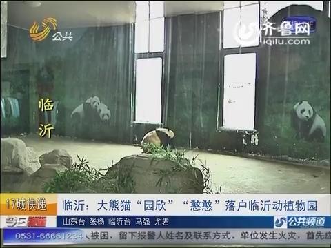 """临沂:大熊猫""""园欣""""""""憨憨""""落户临沂动植物园"""