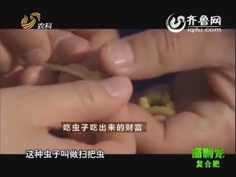 吃虫子吃出来的财富