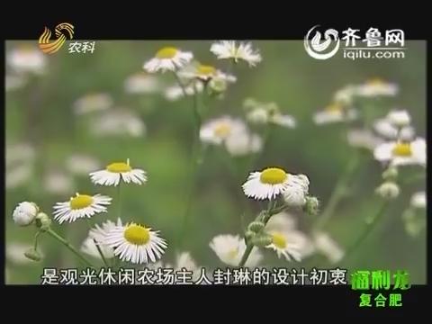 乡村故事:美女农场主情定花果园