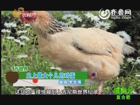开眼界:史上最大个儿的鸡蛋