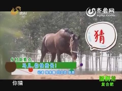 乡村新看点:赛马如何饲养
