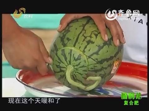 乡村故事 宋会灵:种个西瓜给娃吃