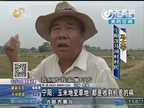 宁阳:玉米地变草地 都是收割机惹的祸