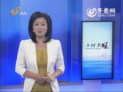 特养故事:萌萌的泰迪犬