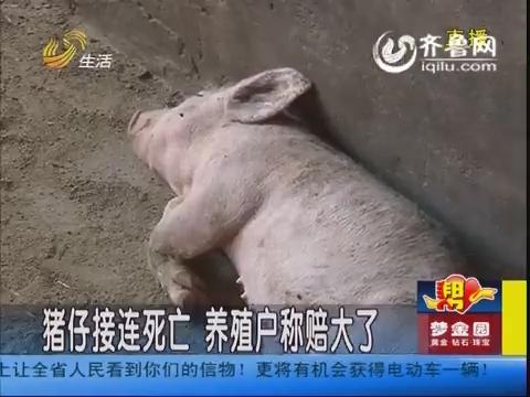 潍坊:猪仔接连死亡 养殖户称赔大了
