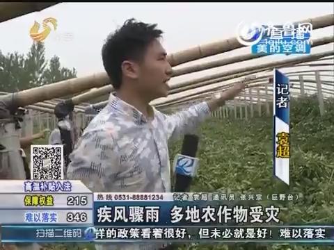山东疾风骤雨 多地农作物受灾