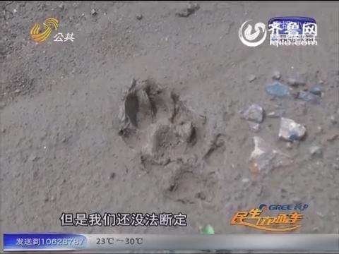 """济南:小区附近""""熊出没"""" 吓坏周围居民"""