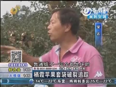 栖霞苹果套袋破裂追踪 专家:叶面肥影响套袋强度