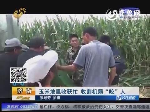 """济南:玉米地里收获忙 收割机频""""咬""""人"""