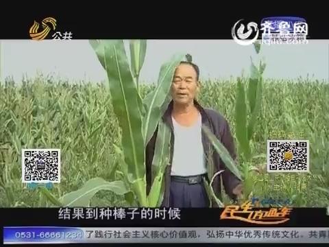 20150923《直通真相》: 百亩玉米减产之后