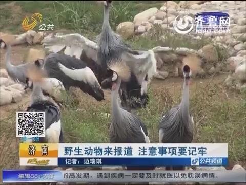 济南:野生动物来报道 注意事项要记牢
