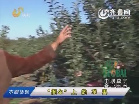 """20151024《农科直播间》:""""倒伞""""上的苹果"""