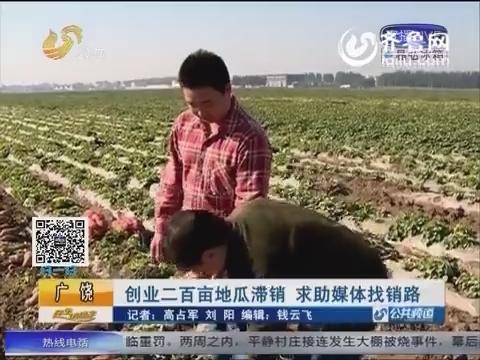 广饶:创业二百亩地瓜滞销 求助媒体找销路