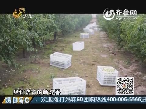 20151108《妈咪GO》:沾化二代冬枣