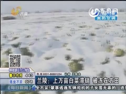 兰陵:上万亩白菜滞销 被冻在农田
